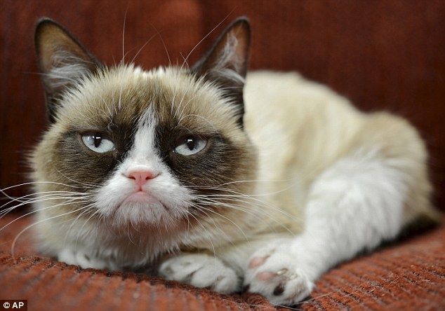 1BE1F14F000005DC-2864212-Internet_sensation_Grumpy_Cat_has_amassed_a_64million_fortune_mo-a-4_1417963545712