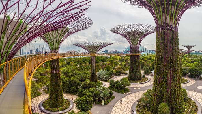 singapore-gardens-by-the-bay-supertree-cloud-forest-7